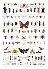 Moth Identification Chart Bugs Insects Identification Chart Wildlife Nature Poster