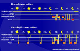 Normal Sleep Pattern Delectable What Is The Difference Between Deep Sleep And Light Sleep Smart
