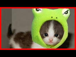 cute kittens in halloween costumes.  Halloween Cute Cats Wearing Costume Throughout Kittens In Halloween Costumes H