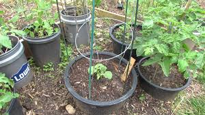 Kitchen Garden In Pots Small Space Container Gardening With 5 Types Of Vegetables The
