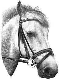 غاوى..........اتفضل sj15--connemara-pony