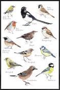 """Inramade poster Fåglar """"Plakat Vögel"""" från JUNIQE - Konstnär: Janine Sommer"""